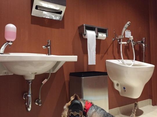 Madison at the pet toilet at the Narita Airport