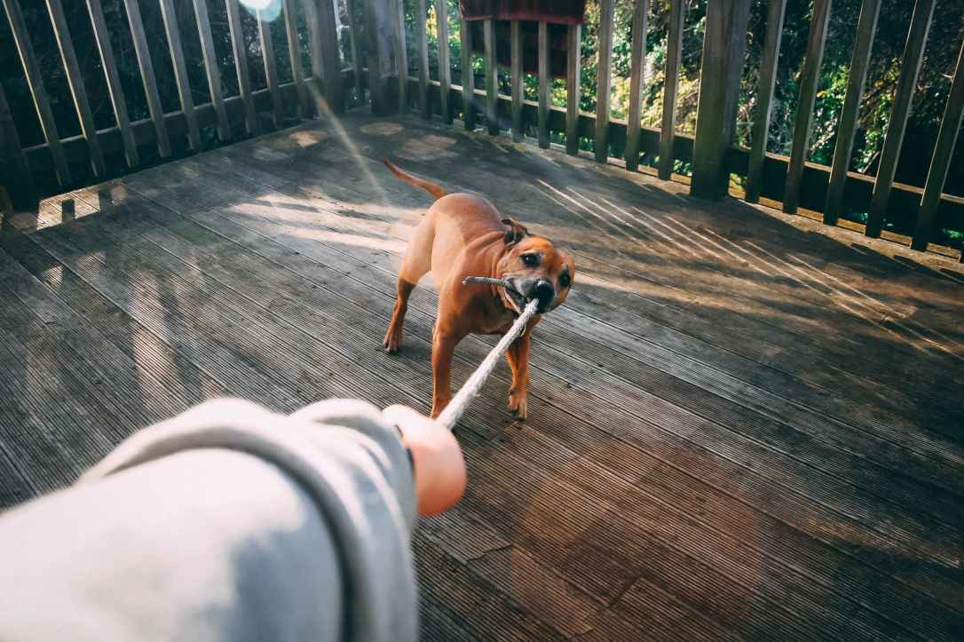 dog biting rope of person holding rope